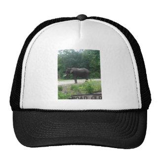 Elephant Standing Regally Mesh Hat