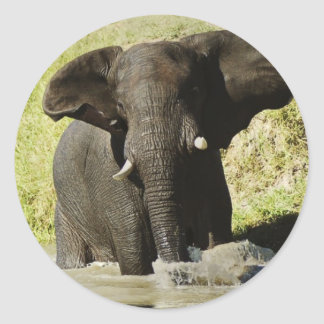 Elephant swimming (african elephant) sticker