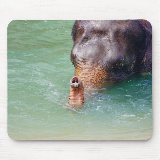 Elephant Trunk Up In Water, Animal Photography Mouse Pad