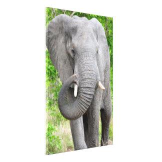 Elephant Walk Wrapped Canvas Print