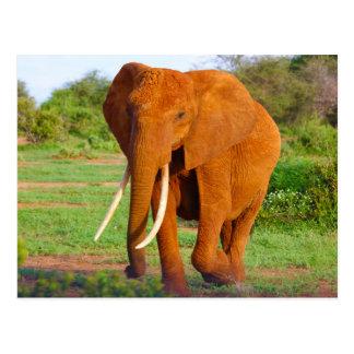 Elephant walking through forest postcard