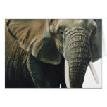 """Elephant"" Wildlife Animal Watercolor Card"