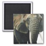 """Elephant"" Wildlife Animal Watercolor Magnets"