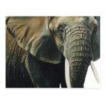 """Elephant"" Wildlife Animal Watercolor Postcards"