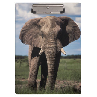 Elephant young male clipboard