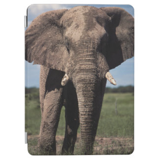 Elephant young male iPad air cover