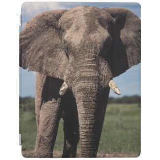 Elephant young male iPad cover