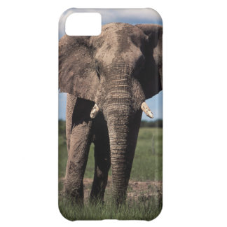 Elephant young male iPhone 5C case