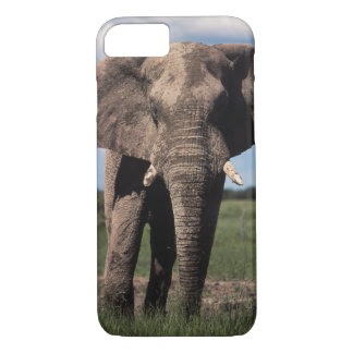 Elephant young male iPhone 7 case