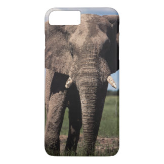 Elephant young male iPhone 7 plus case