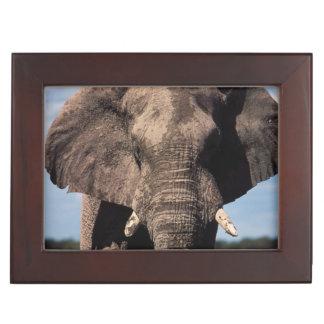 Elephant young male keepsake box