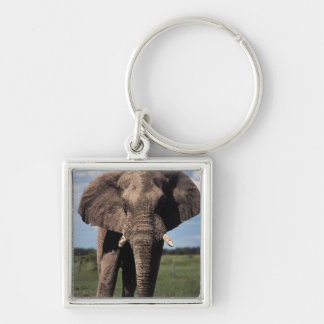 Elephant young male key ring