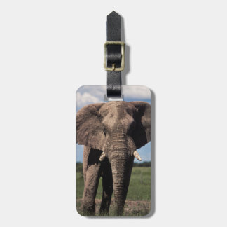 Elephant young male luggage tag