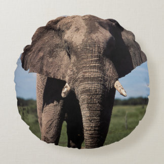 Elephant young male round cushion