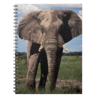 Elephant young male spiral notebook