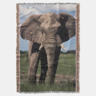 Elephant young male throw blanket