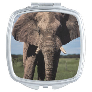 Elephant young male travel mirrors