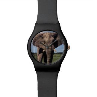 Elephant young male wrist watch