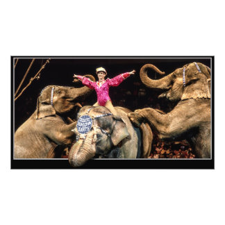 Elephants At The Circus Photo Art
