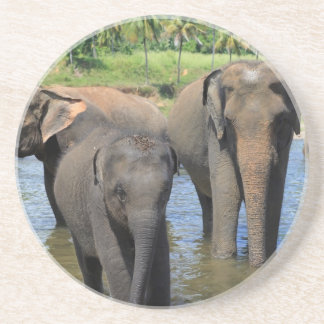 Elephants bathing in river Sri Lanka Coaster