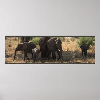 Elephant's Elegance Posters