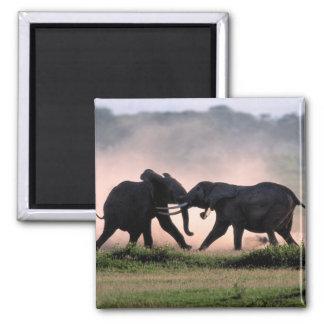 Elephants. Magnet