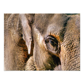 ELEPHANTS PHOTO PRINT