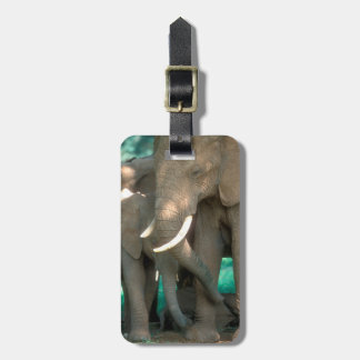 Elephants Protecting Young Luggage Tag