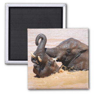 Elephants water world square magnet