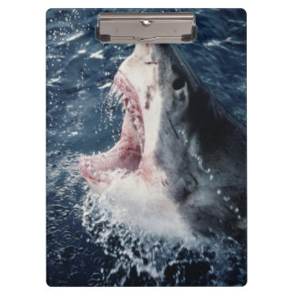 Elevated Shark mouth open Clipboard