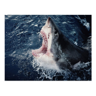 Elevated Shark mouth open Postcard