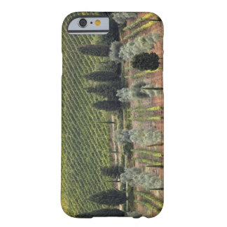 Elevated view of vineyard and olive trees barely there iPhone 6 case