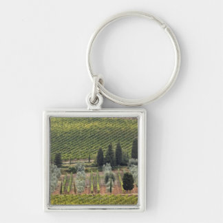 Elevated view of vineyard and olive trees key ring