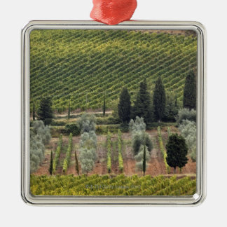 Elevated view of vineyard and olive trees Silver-Colored square decoration