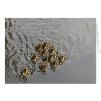 Eleven Baby Ducks on The River Kennet Card