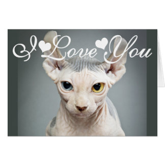 Elf Sphinx Cat Photo Image I Love You Greeting Card