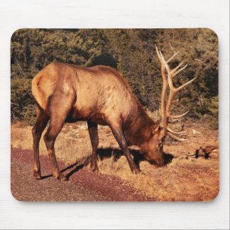 Elk -  An Elk Eating Mousepads