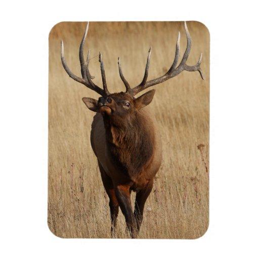 elk and eye bulging vinyl magnets