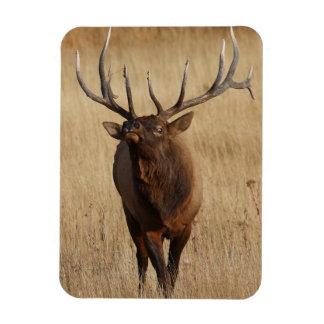 elk and eye bulging rectangular photo magnet