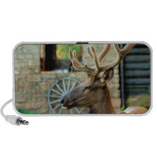 Elk and Wagon Wheel Speaker