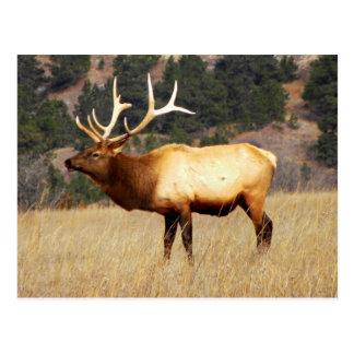 Elk at Fort Niobrara National Wildlife Refuge Postcard