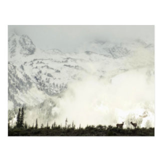 Elk at Grand Teton National Park Photography Postcard