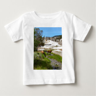 Elk at Mammoth Hot Springs Shirts