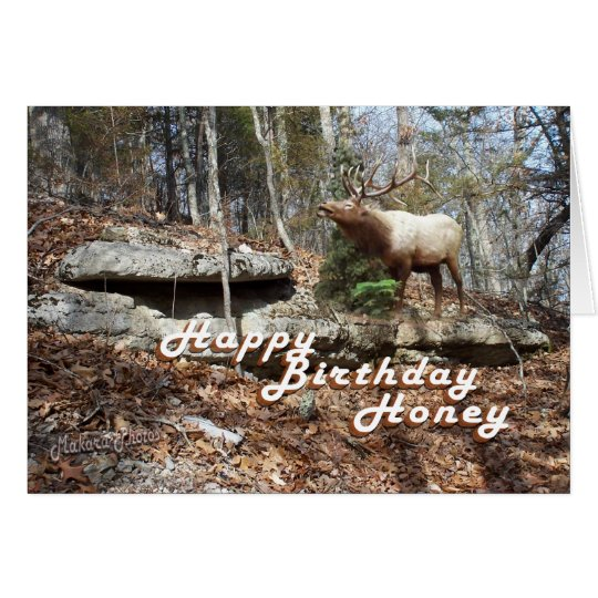 Elk Birthday card