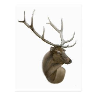 Elk Buck Postcard