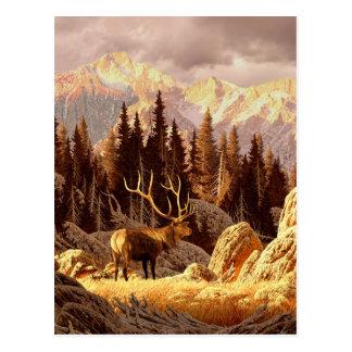 Elk Bull Postcard