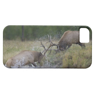 Elk Bulls fighting, Yellowstone NP, Wyoming Barely There iPhone 5 Case