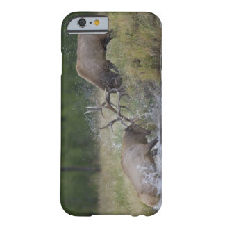 Elk Bulls fighting, Yellowstone NP, Wyoming Barely There iPhone 6 Case