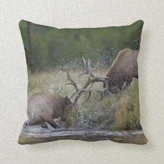 Elk Bulls fighting, Yellowstone NP, Wyoming Cushion