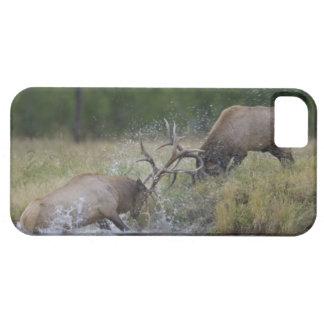 Elk Bulls fighting, Yellowstone NP, Wyoming iPhone 5 Covers